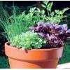 Пять причин начать выращивать зелень и овощи дома